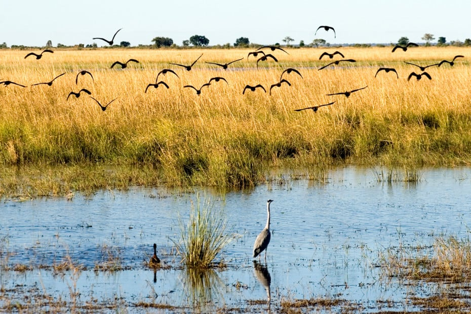 nature photography art africa