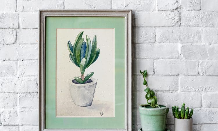 succulent mockup plant illustration